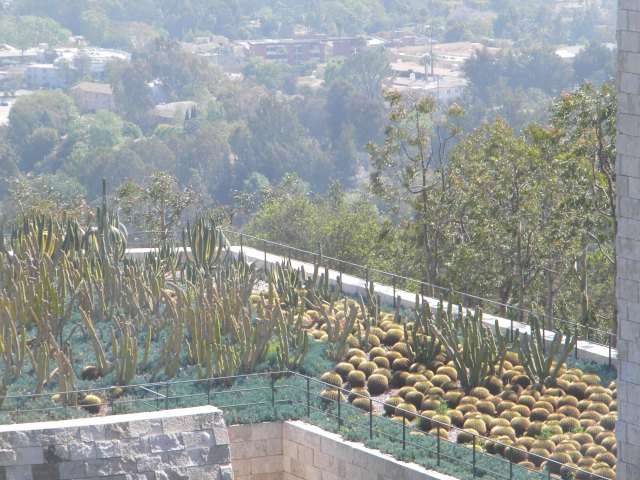 cacti winter garden
