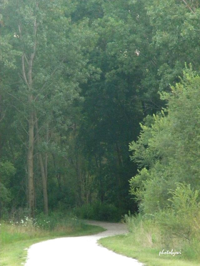 a meandering path at mallard lake