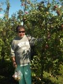 viv picking gala apples