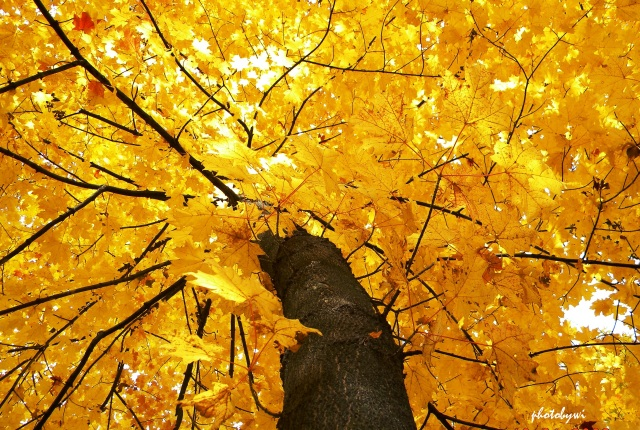splendor of autumn mundelein seminary