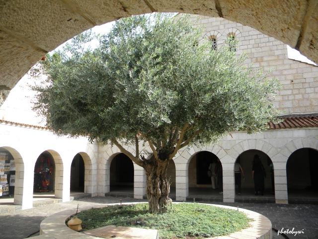 church of multiplication courtyard, tabgha