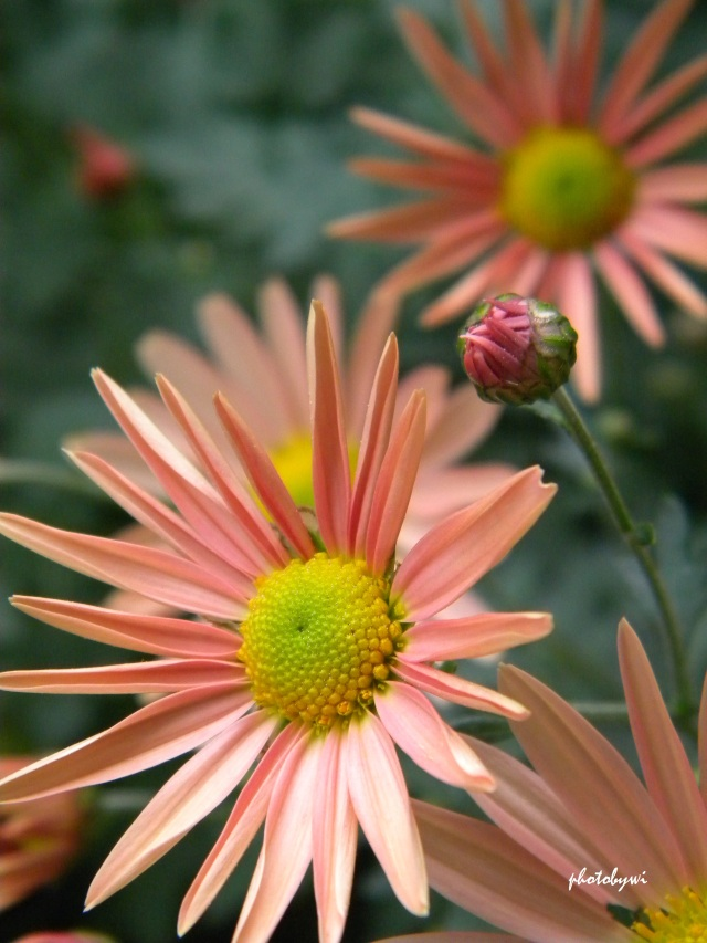 pretty blooms in early autumn
