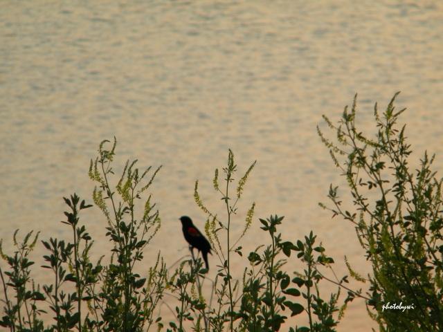 bird at mallard lake