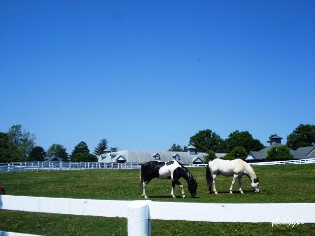 lexington horse park, ky