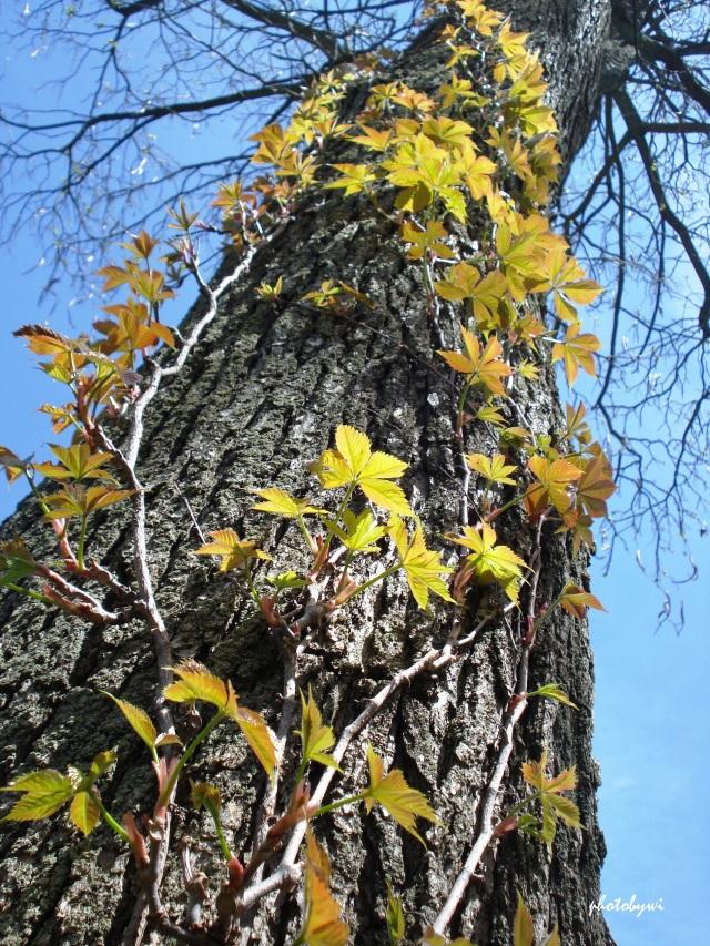 morton arboretum in lisle