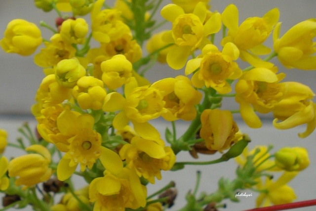 spring flowers, morton arboretum in lisle